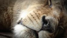 Il sonno degli animali