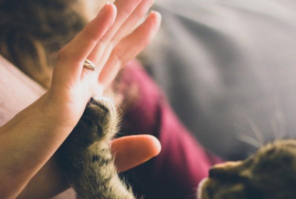 Pet Therapy: l'amicizia che cura (parte 2 – animali e terapie)