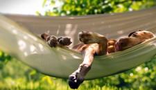 La posizione del sonno nei cani