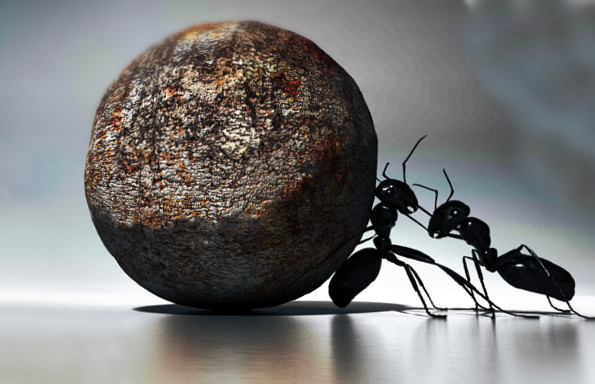 Ma… le formiche dormono?