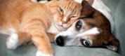 Cani-Gatti-Sonno