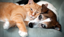 Cats, dogs and sleeping difficulties